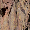 Climbing Partners, One on Ledge, Eldorado Canyon, 401106B_077