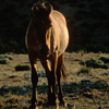 Young Wild Mustang Timidly Approaches Me, 300701_3_21