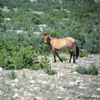 Wild Mustang Mare Looking At Me, 300701_4_23