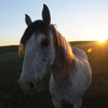 Early Morning Sun, Mustang Mare on the Star Flower  Ranch: 430614_404
